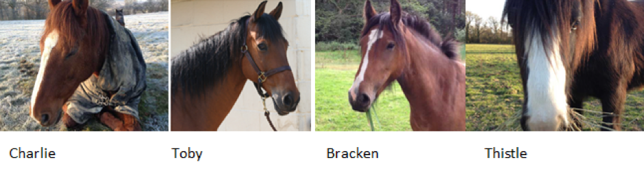 horses from leadership