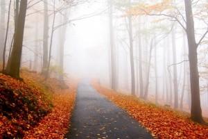 autumn road sept 2019
